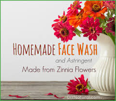 Homemade Flowers Homemade Face Wash And Astringent Made From Zinnia Flowers