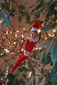 63 best seed lights ideas images on pinterest christmas lights