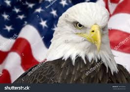 Eagle American Flag Bald Eagle American Flag Out Focus Stock Photo 107139269