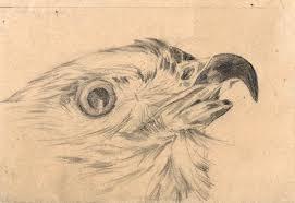 bird sketches idea