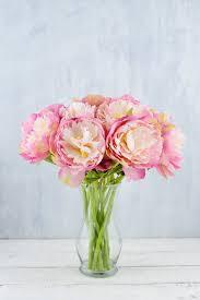 peony flowers pink mauve peony flowers