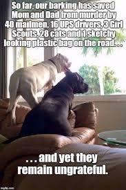 Dog Mom Meme - dogs our barking has saved mom and dad from muder by 40 mailmen