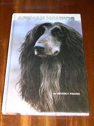 afghan hound look alike breeds 95 best afghan hound books readables images on pinterest afghans