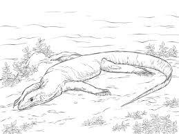 realistic monitor lizard coloring free printable coloring pages