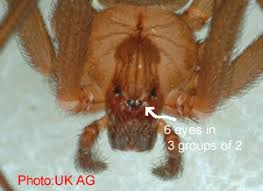 Are Spiders Attracted To Light Get Rid Of Brown Recluse Spiders