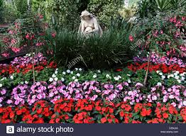 a floral display in the glasgow winter gardens scotland uk stock