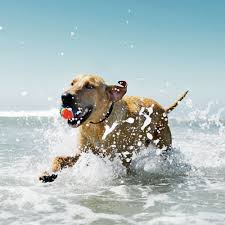 best dog friendly beaches coastal living