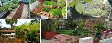 terrace gardening terrace gardening green corner india gurgaon horticulture