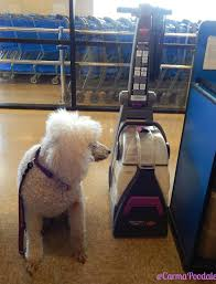Rug Shampoo Machines Carma Poodale Pawsitively Clean Bissell Carpet Cleaner Rental