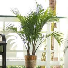 Indoor Tropical Plants For Sale - shop tropical plants at lowes com