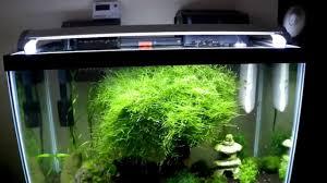 best fan for aquarium interior cool small aquariums mollies stunning coolest aquarium