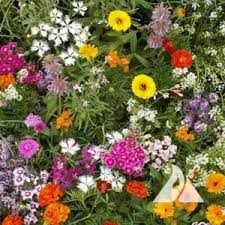 Fragrant Flowers For Garden - seeds for fragrant plants
