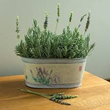potted plants for indoors white flower farm