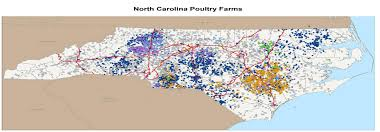 Nc Backyard Birds This Year U0027s Bird Flu Think Critters Not People North Carolina