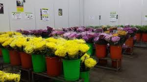 Flowers Wholesale Fresh Cut Flowers Wholesale Far East Flora Thomson Road