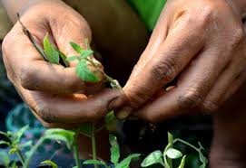 how to propagate plants planet