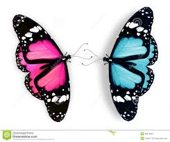 pink and blue butterfly on white stock photos image 28212963
