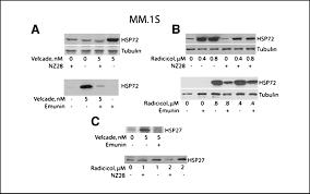 targeting heat shock response to sensitize cancer cells to