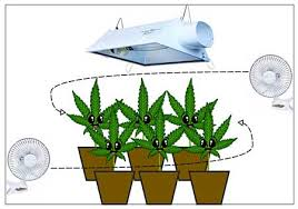 Beginners How To Grow Just by 7 Step Remedy To 99 Of Cannabis Growing Problems Grow Weed Easy