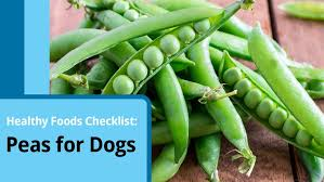 finding the best diet for dogs with pancreatitis petmd