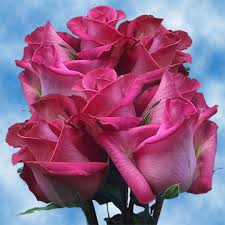 roses delivery cheap hot pink roses delivery wedding decorations roses global