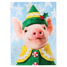 christmas pig in suit christmas card
