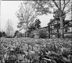 seasons in black and white disperser tracks