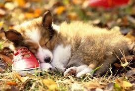 photo collection baby puppy wallpaper backgrounds thanksgiving