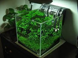 nano aquascape aquatic eden aquascaping aquarium blog