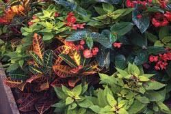 Tropical Plants For Garden - tropical looking plants for the garden gardener u0027s corner