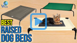 top 10 raised dog beds of 2017 video review