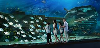 s e a aquarium attractions in singapore resorts world sentosa