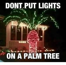 Tree Meme - dont put lights on a palm tree meme on me me