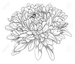 Flower Drawings Black And White - 47 best flowers images on pinterest drawings mandalas and
