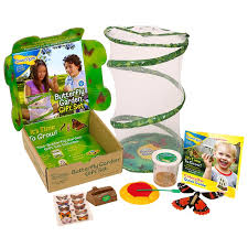 gift set butterfly garden gift set with live cup of caterpillars
