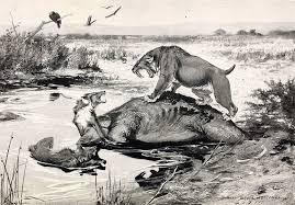 cougars survived ice age u2013 phenomena