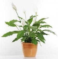 the 25 best plants for low light ideas on pinterest low light