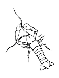 Crayfish Coloring Page crayfish crowfish coloring page free printable coloring pages