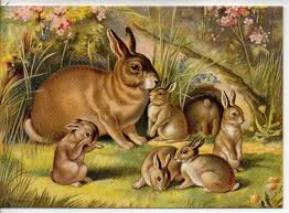 vintage rabbit unique cards vintage books