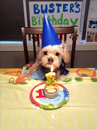 dog birthday party lovely dog birthday picture ideas selection photo and picture ideas