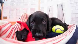 today s today puppy updates from today s puppy with a purpose today com