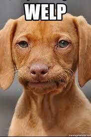 Dog Meme Generator - welp welp dog meme generator