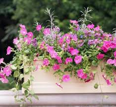 What To Plant In Window Flower Boxes - 30 bright and beautiful window box planters midwest living