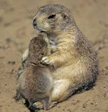 daily cute play u0027groundhog groundhog u0027