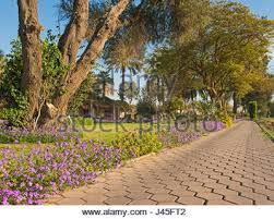 footpath through flowering bushes and trees in tropical