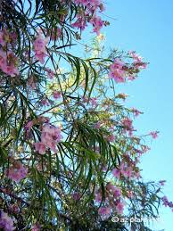 desert native plants 10 beautiful native trees for the southwest ramblings from a