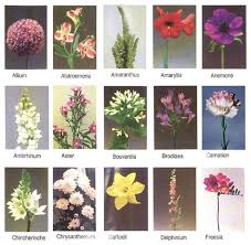 wedding flowers list list of flowers with pictures pictures reference