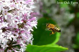 from which plant did your honey come keeping backyard bees