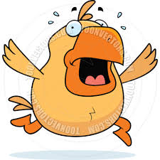 cartoon chicken panic by cory thoman toon vectors eps 900