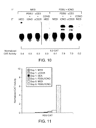 patent us7067318 methods for transfecting t cells google patents